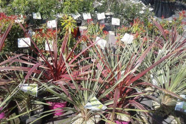 plantes-exterieures-serres-des-lacs-2