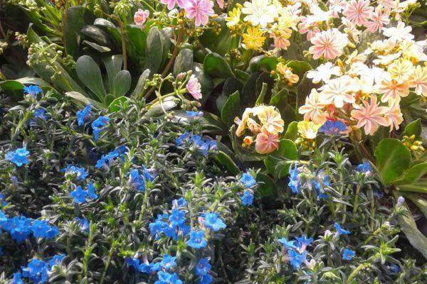plantes-exterieures-serres-des-lacs-3