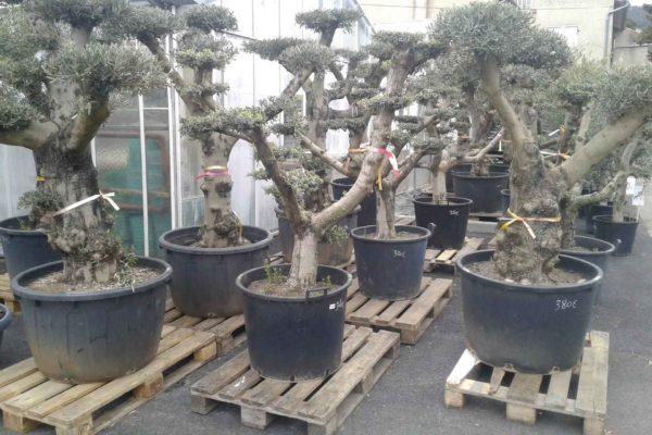 plantes-exterieures-serres-des-lacs-4