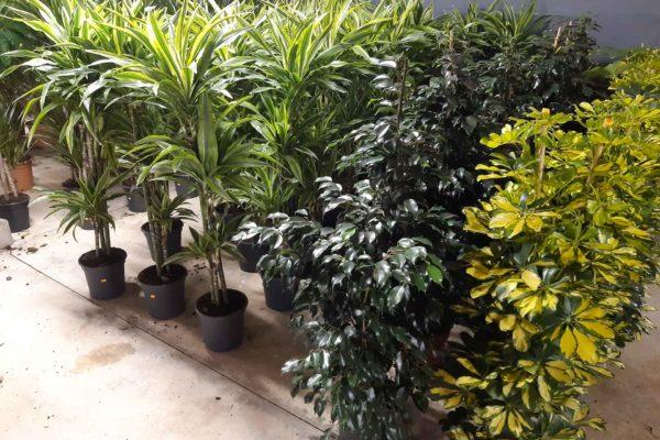 plantes-interieures-serres-des-lacs-1